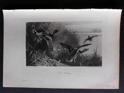 Aflalo 1898 Antique Print. Duck Shooting